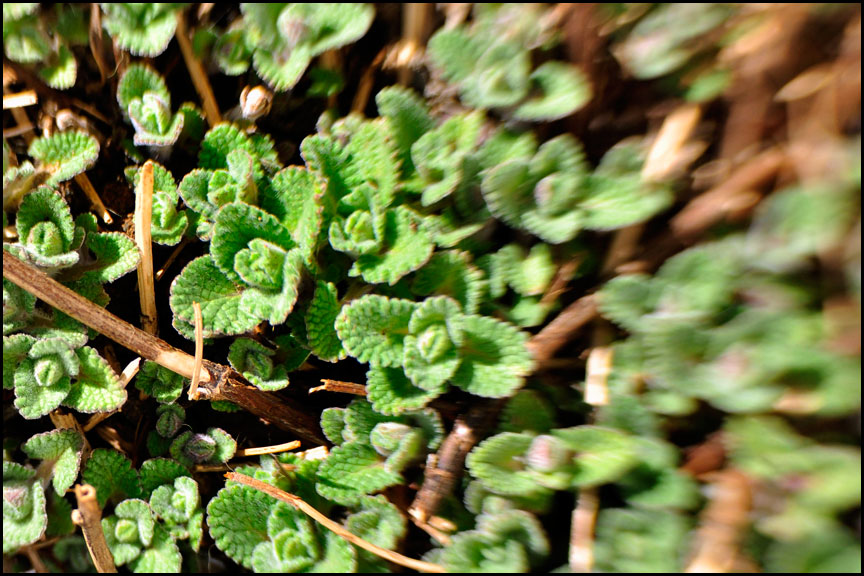 soft-leaves-4-8-14-lensbaby