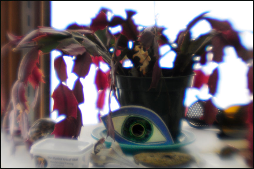 xmas-cactus-and-eye