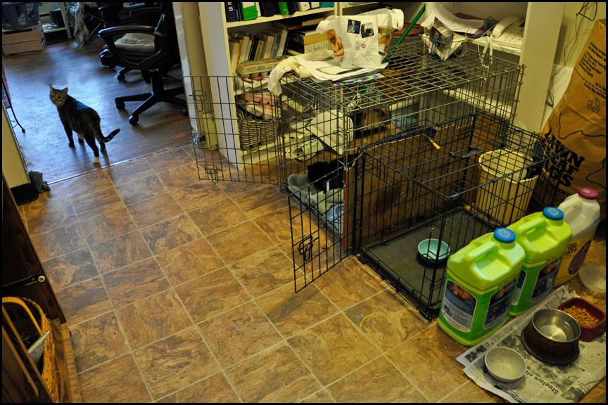 cat-kitchen-12-21-14