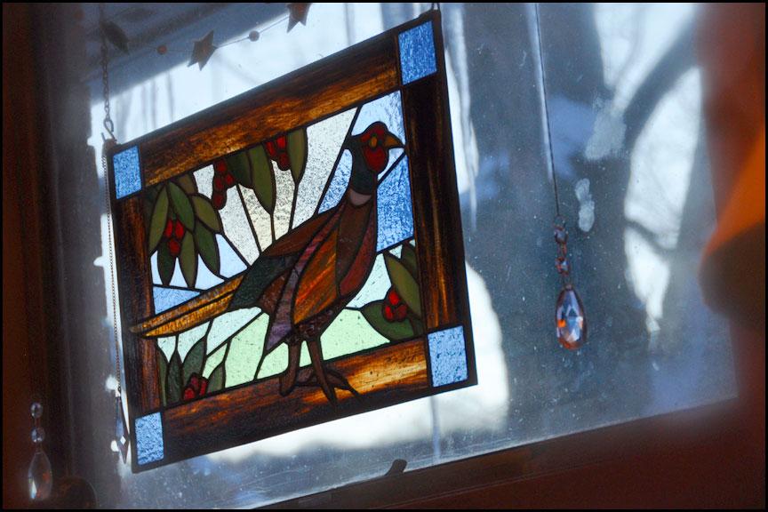 pheasant-morning-light-2-15-15