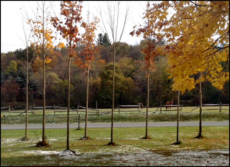first-snow-last-night-10-18-15