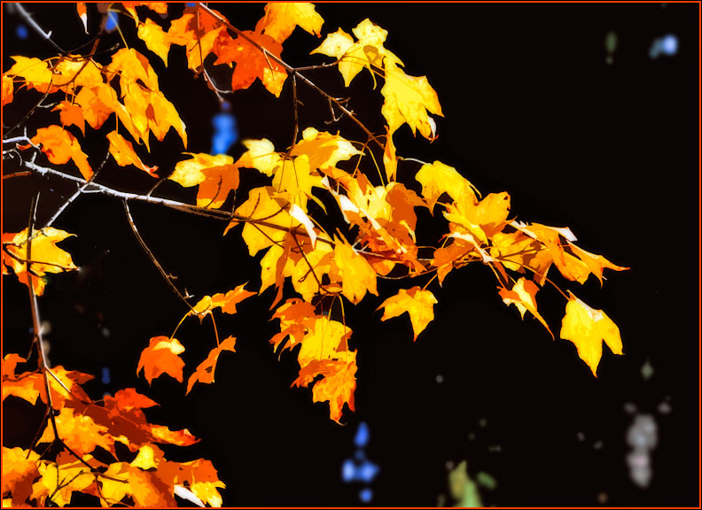 maple-leaves-10-19-15