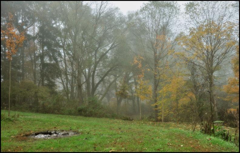 foggy-backyard-10-23-15