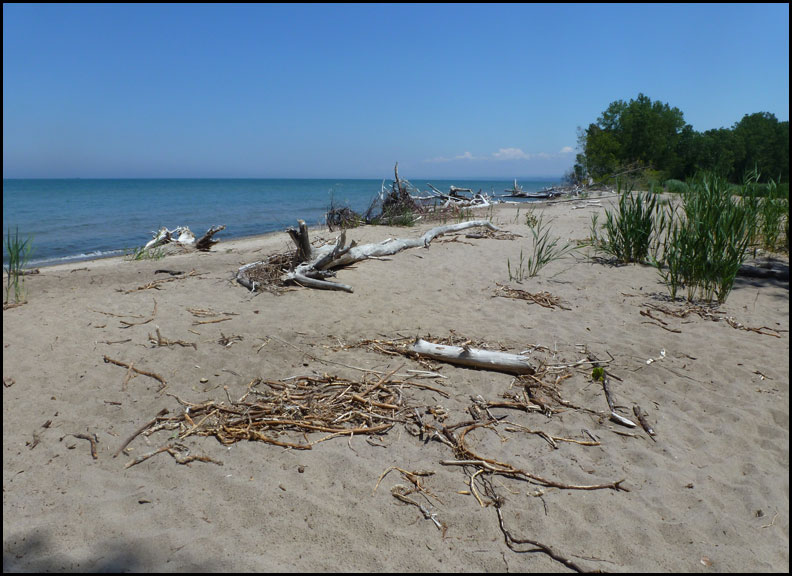 P1030517-driftwood-beach