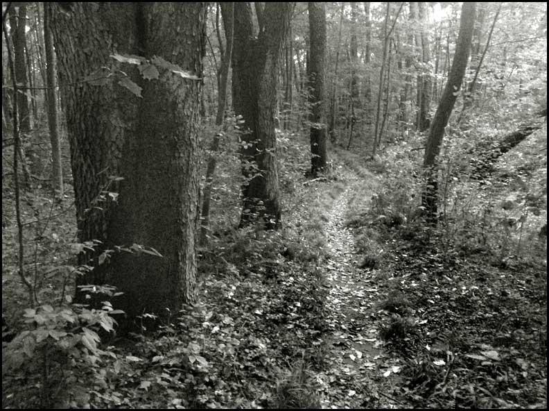 2-mile-run-creek-path-8-23-