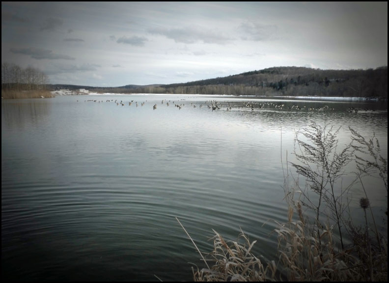 a P1040163-lake-geese