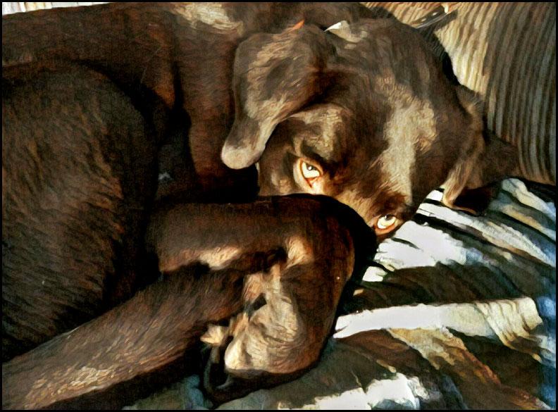 Image-1-(28)-sleepy-andy