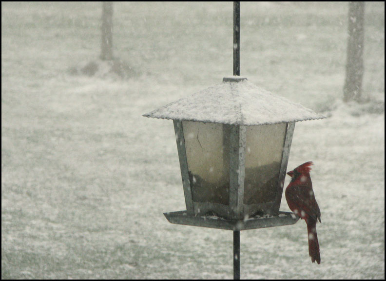 cardinal-snow-3-3-17