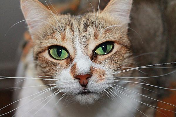 кот (20)