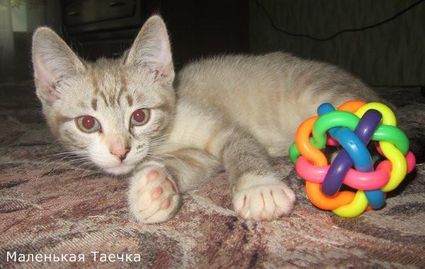 кот (19)