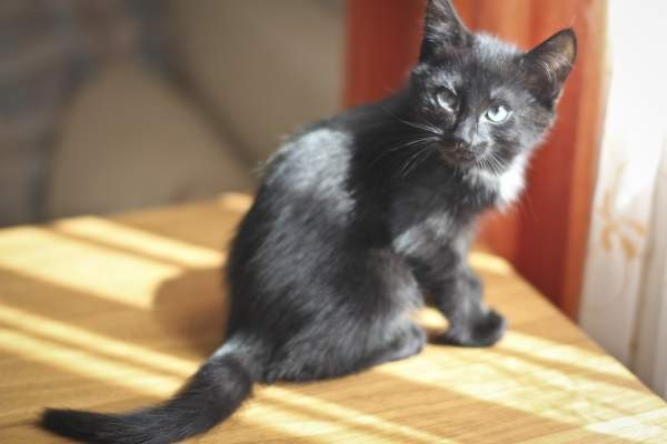 кот (6)