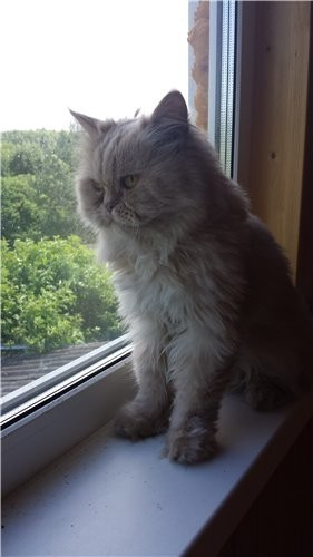 кот (18)