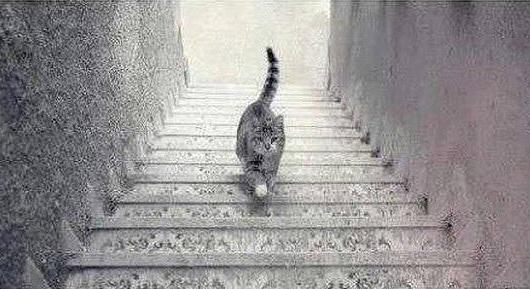 merdivende-yuruyen-kedi-dunyayi-ikiye-boldu-7176894_2709_m