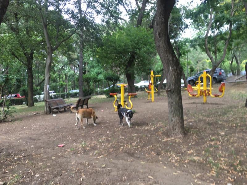 Бродячих собак в Тбилиси навалом. Малхаз сказал, что их на попечительство взял какой то миллиардер. Кормит, поит, лечит.
