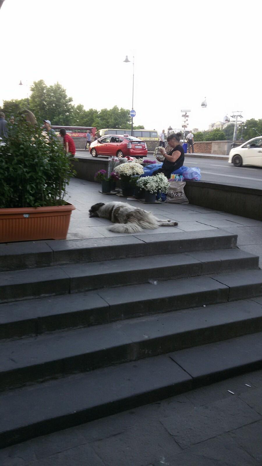 Эту собаку почтительно обходил весь людской поток, сфотали в какой то странный момент, когда никто не обходит. Там очень людно.