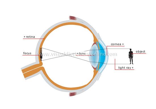 normal-vision