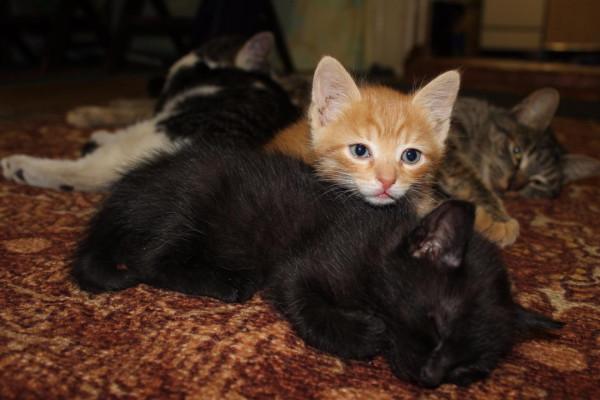 Коты Лилы