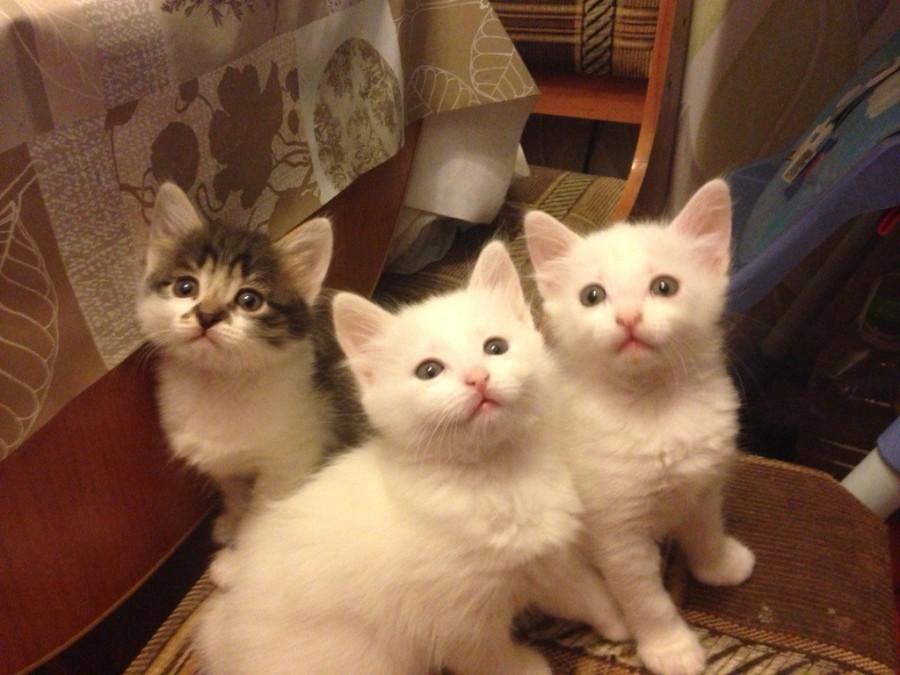 Андрюшины котята