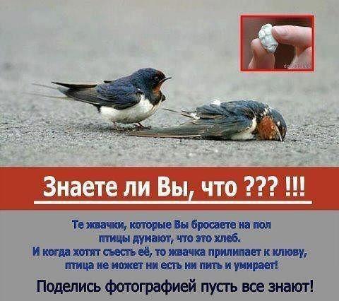БАНЕР ПРО ЖВАЧКУ