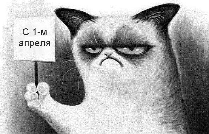 1 апр.кот