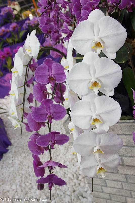 Tokyo.Dome.Orchids-3631