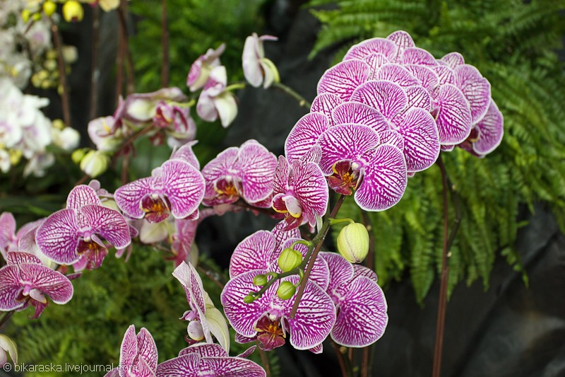 Dome.Orchids-3594
