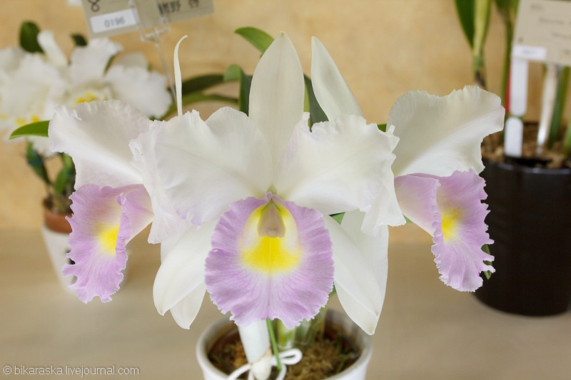 Tokyo.Dome.Orchids-3667