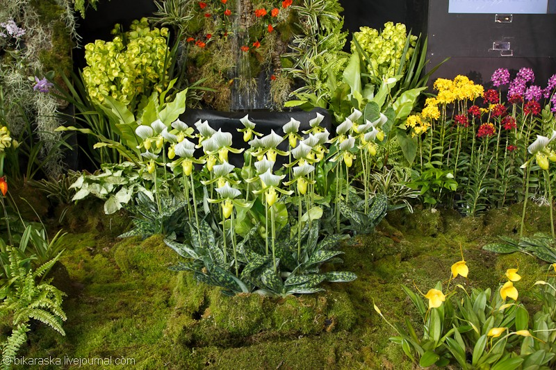 Tokyo.Dome.Orchids-3699