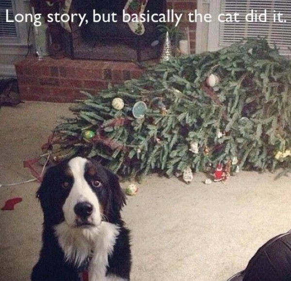 cattree