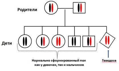 Нормальный ген SRD5A2 обозначен чёрным цветом, дефектный красным.