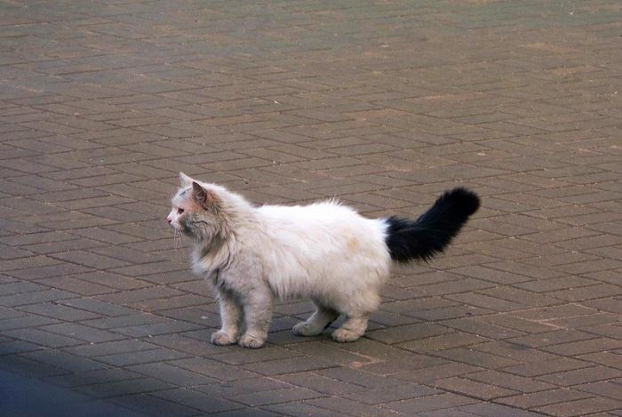 котик на перроне