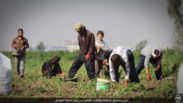 ИГИЛ.Сельское хозяйство