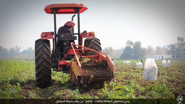 Ракка. Картофельное поле