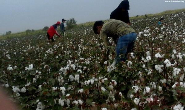 Туркмения. Продовольственный кризис