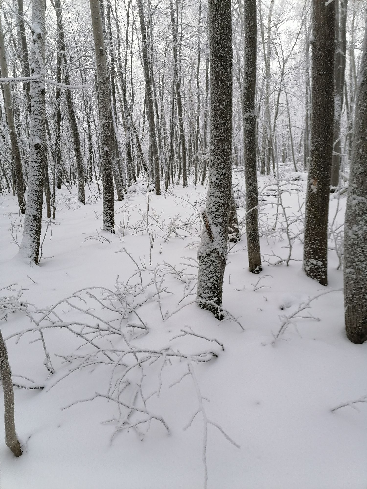 снег на стволах