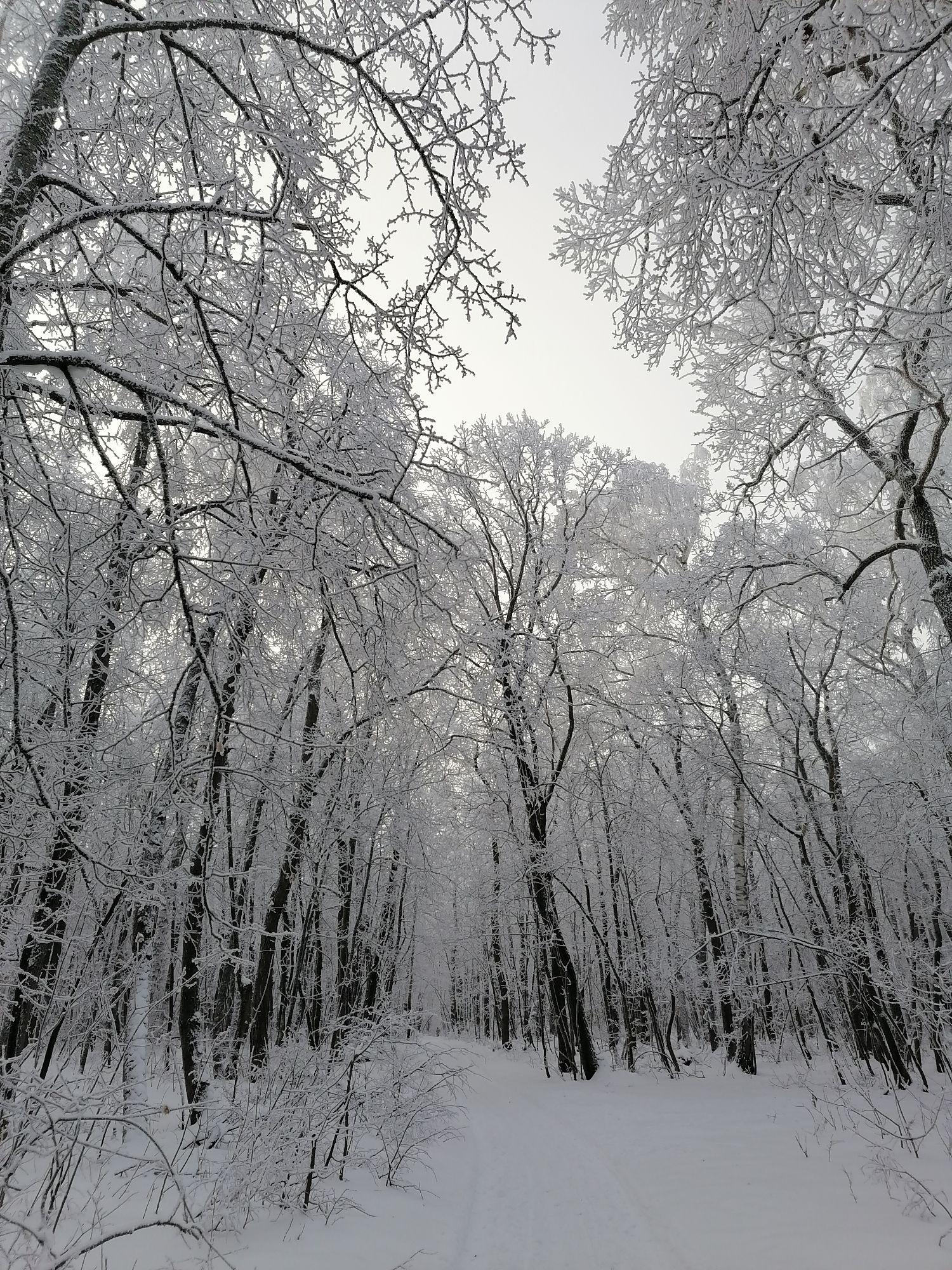 на ветках снег