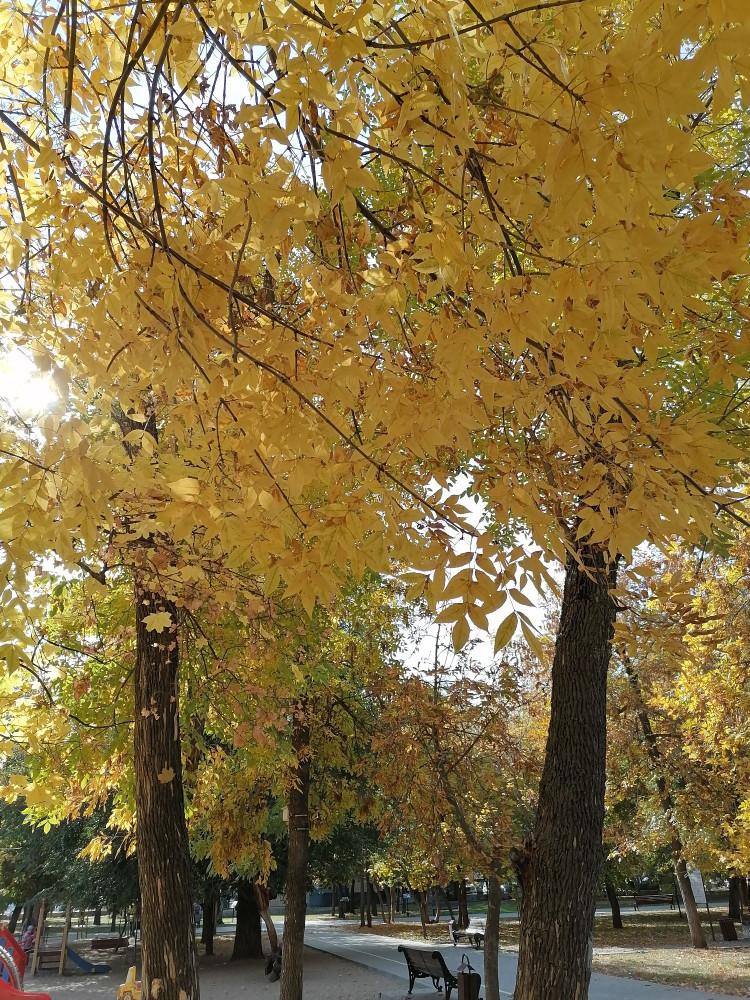 Сегодня тепло, разогрело до 17 градусов. Листья тихонько опадают.