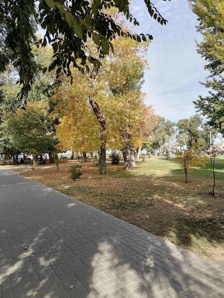 Вязы стоят ещё зелёные, все остальные деревья уже желтеют, краснеют, сбрасывают листву.
