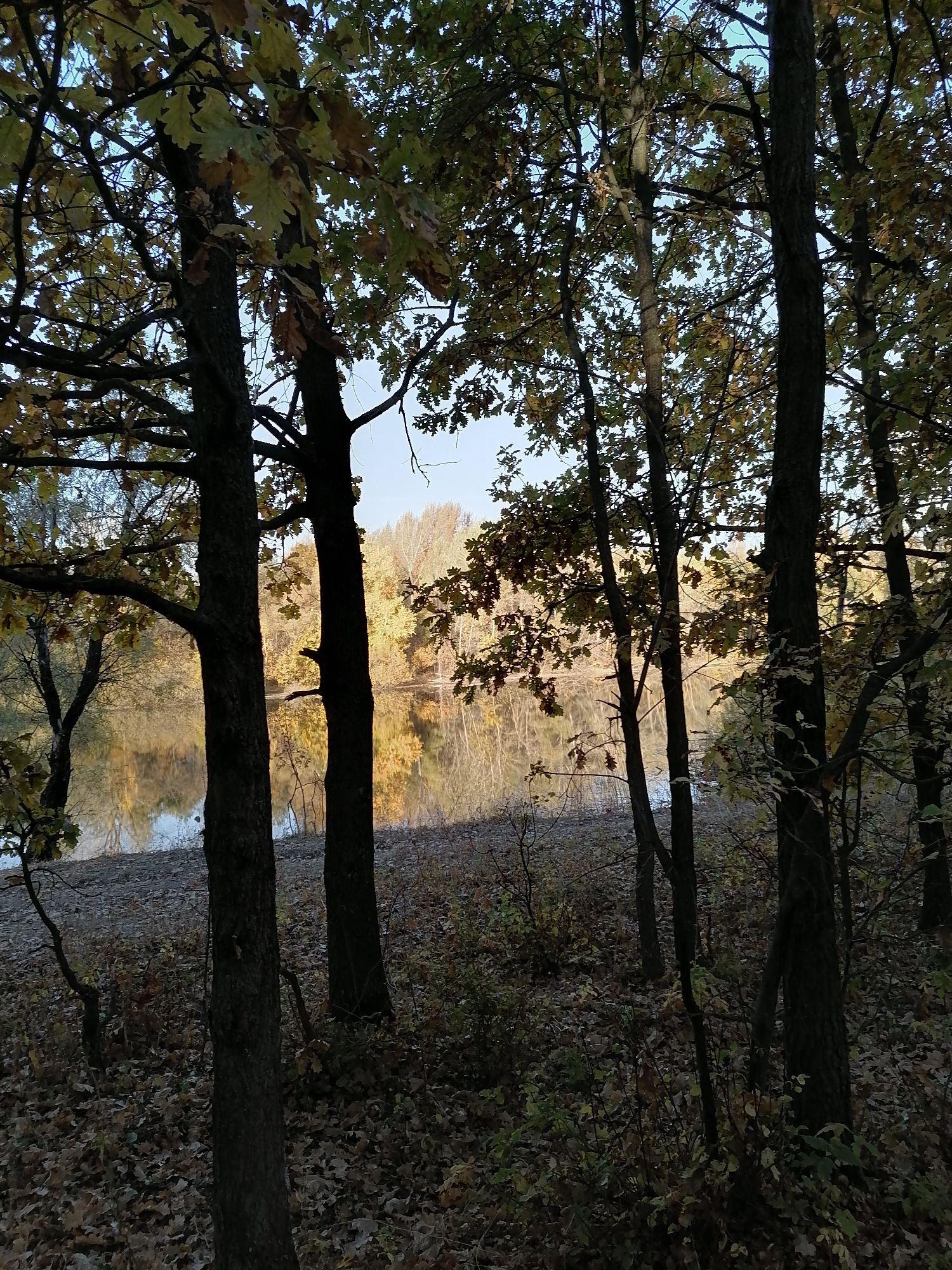 если смотреть сквозь стройные тела дубов, то кажется,что на том берегу начинается сказочный лес