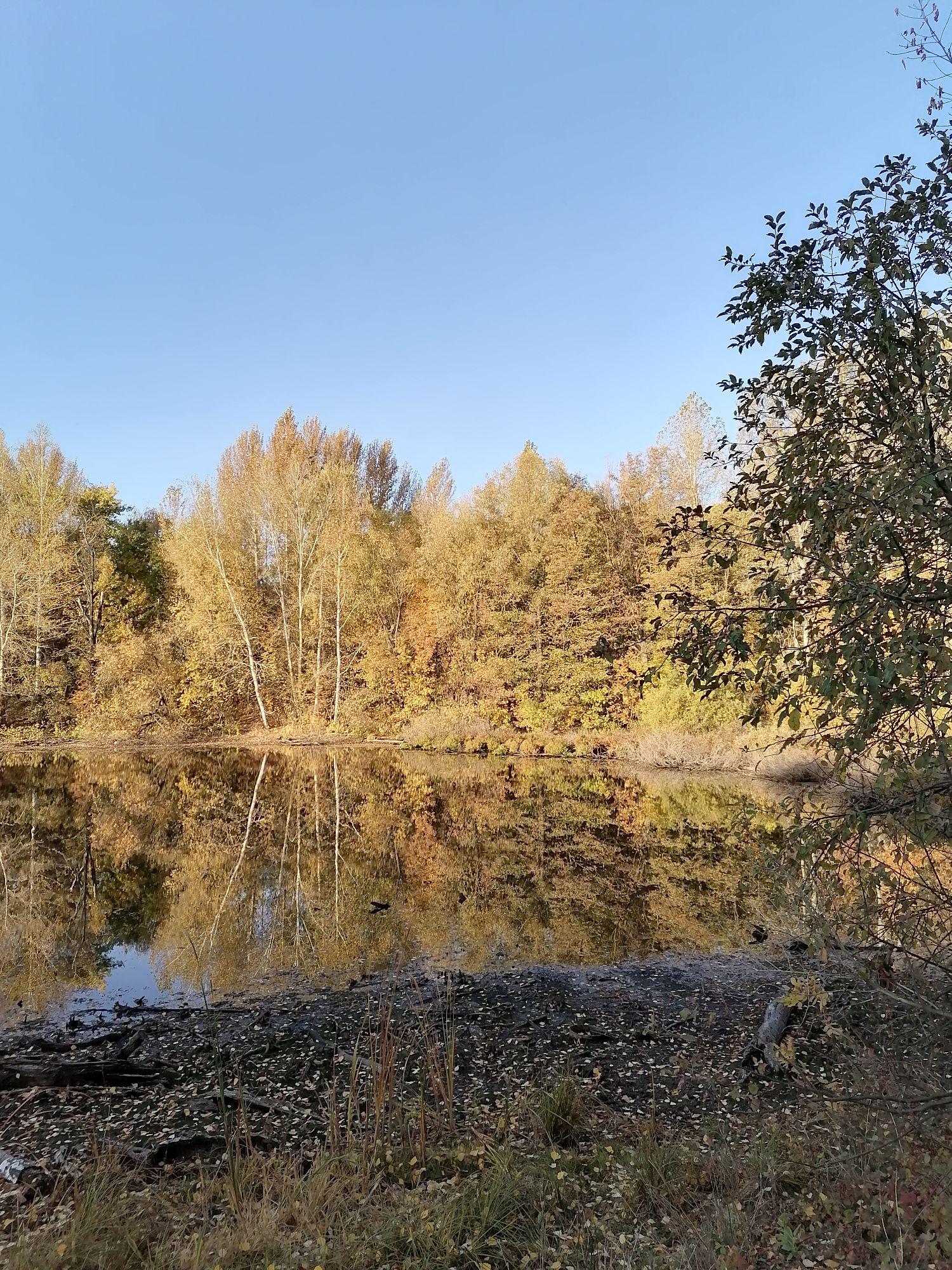 гладь воды как зеркало. жаль,что озеро обмелело к осени