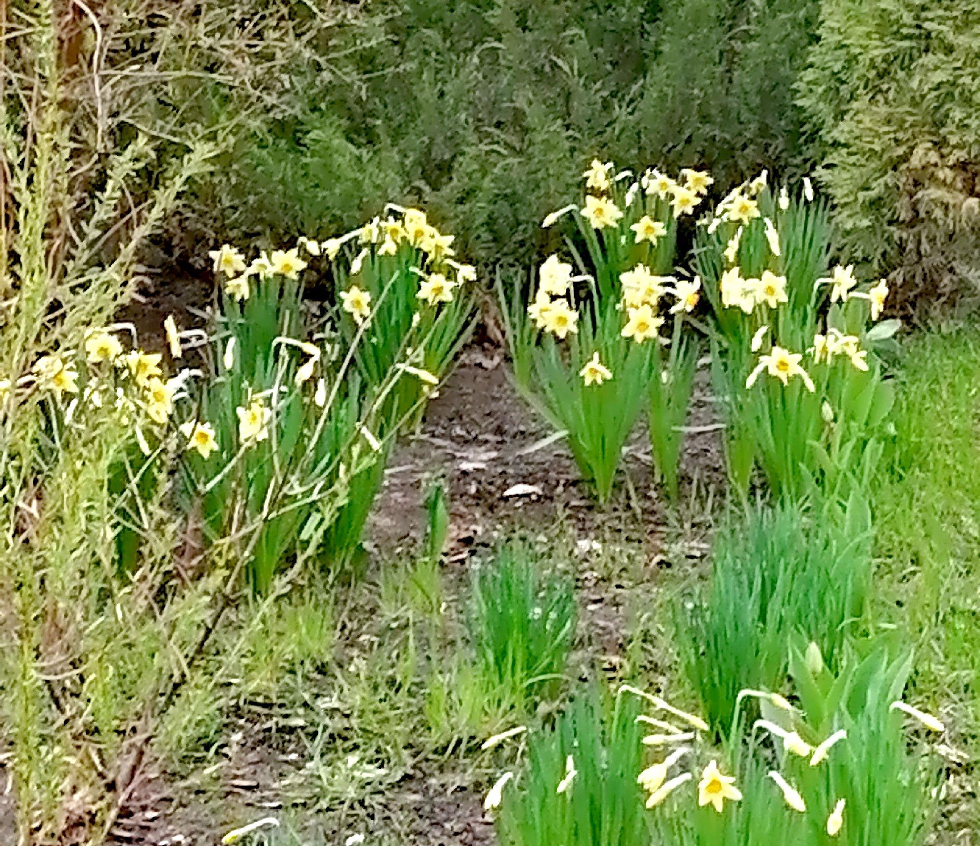 Нежные жёлтые возле детского сада