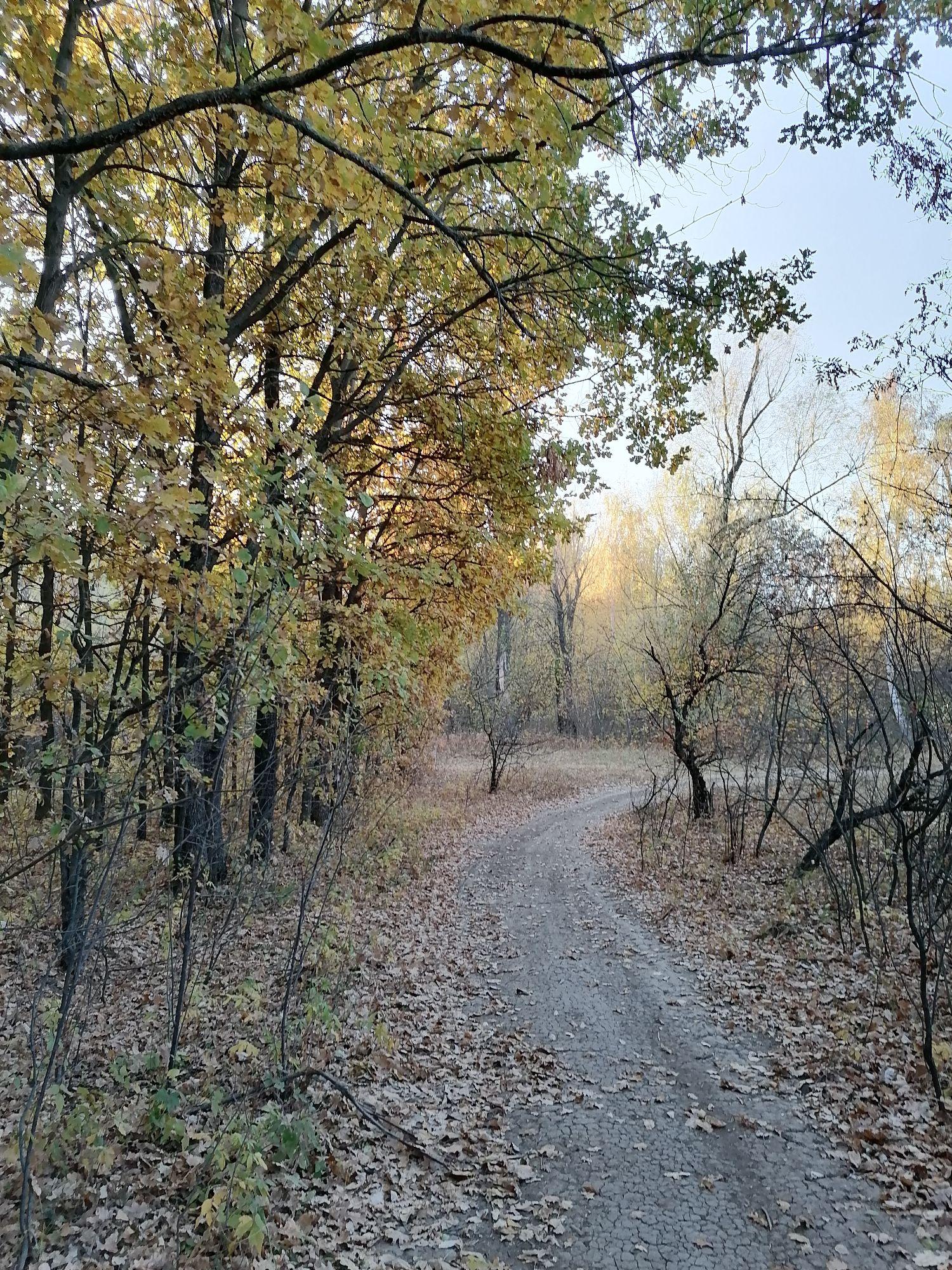 дорога в лес, справа тёрн, уже без листьев, но с мелкими кислыми ягодами