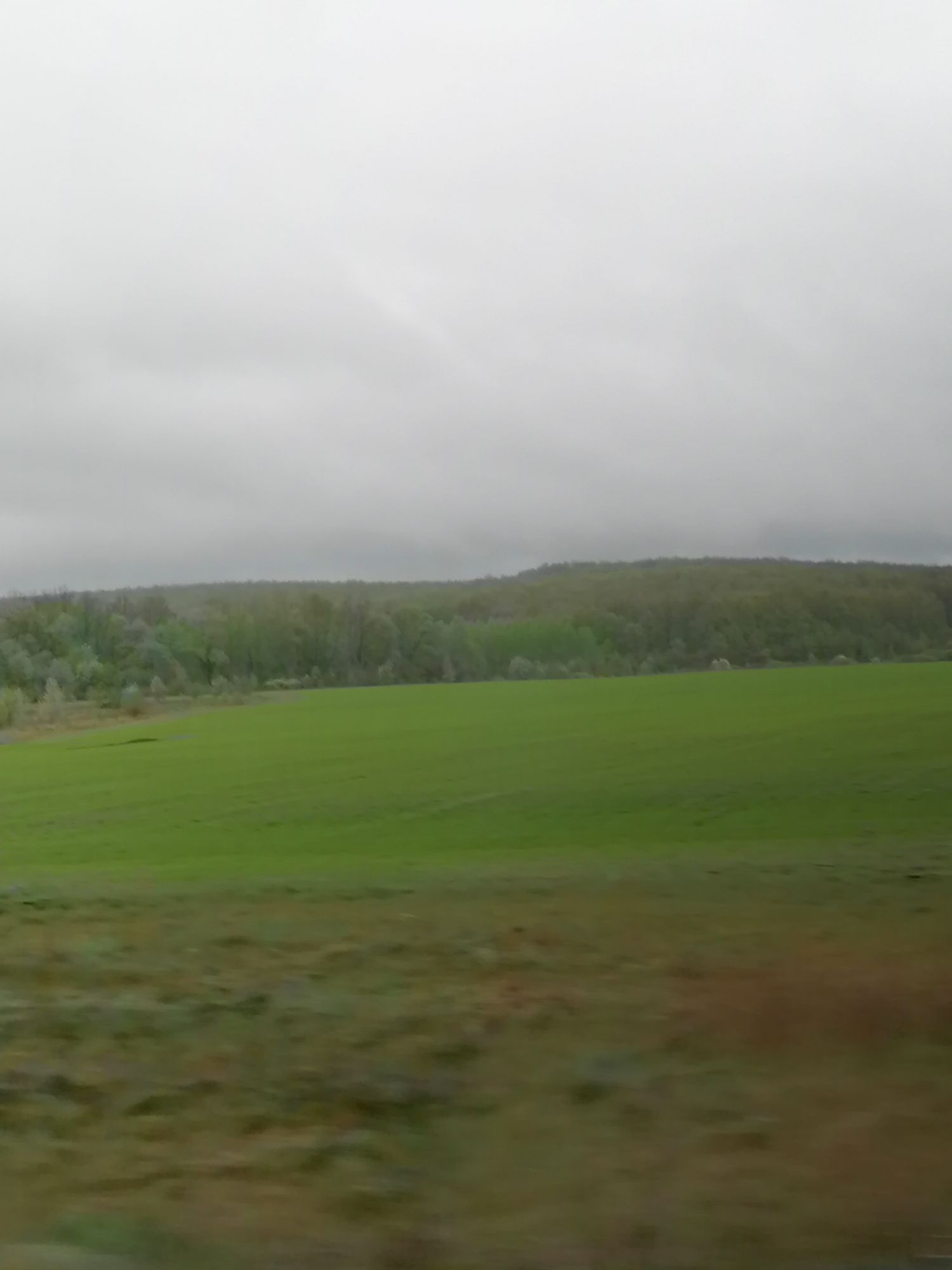 Насыщенный зелёный