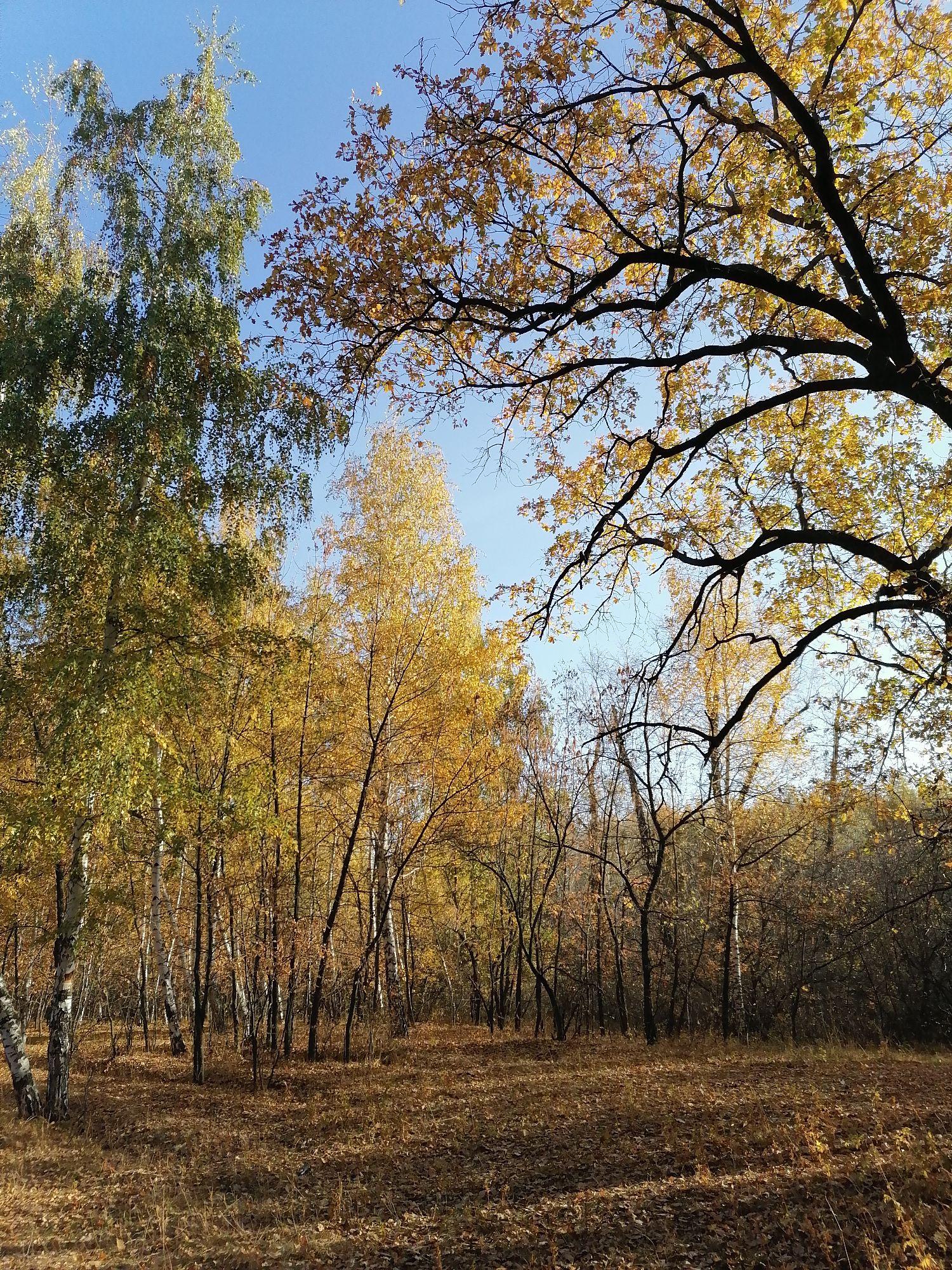 слышен шелест листьев - это лёгкий ветер гуляет в верхушках деревьев