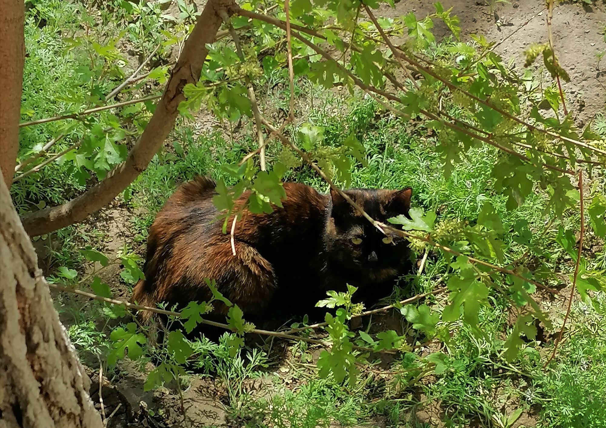 Милый котейка во дворе знаменитого Дома Павлова
