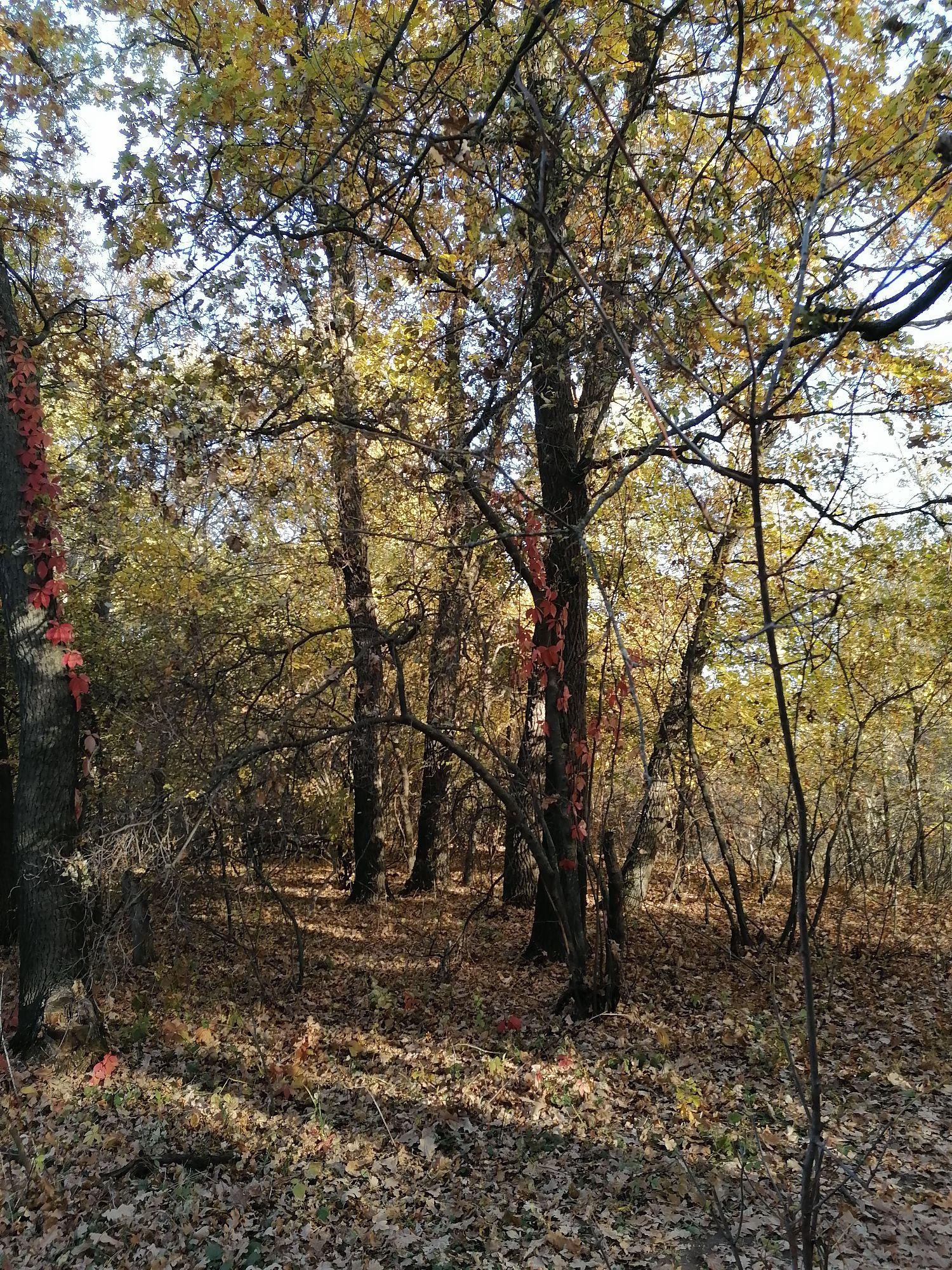 кажется,что деревья кто-то украсил красными гирляндами