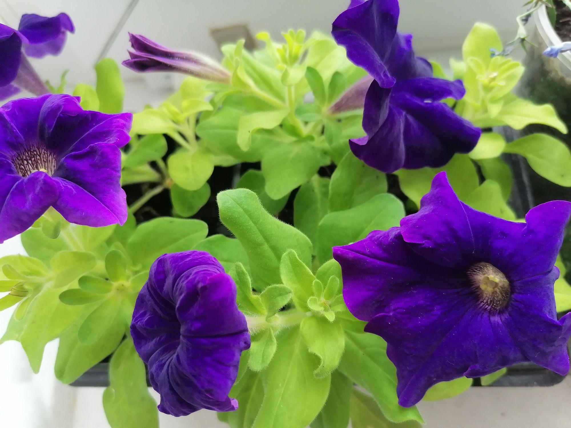 Цветы нужно срочно пересаживать