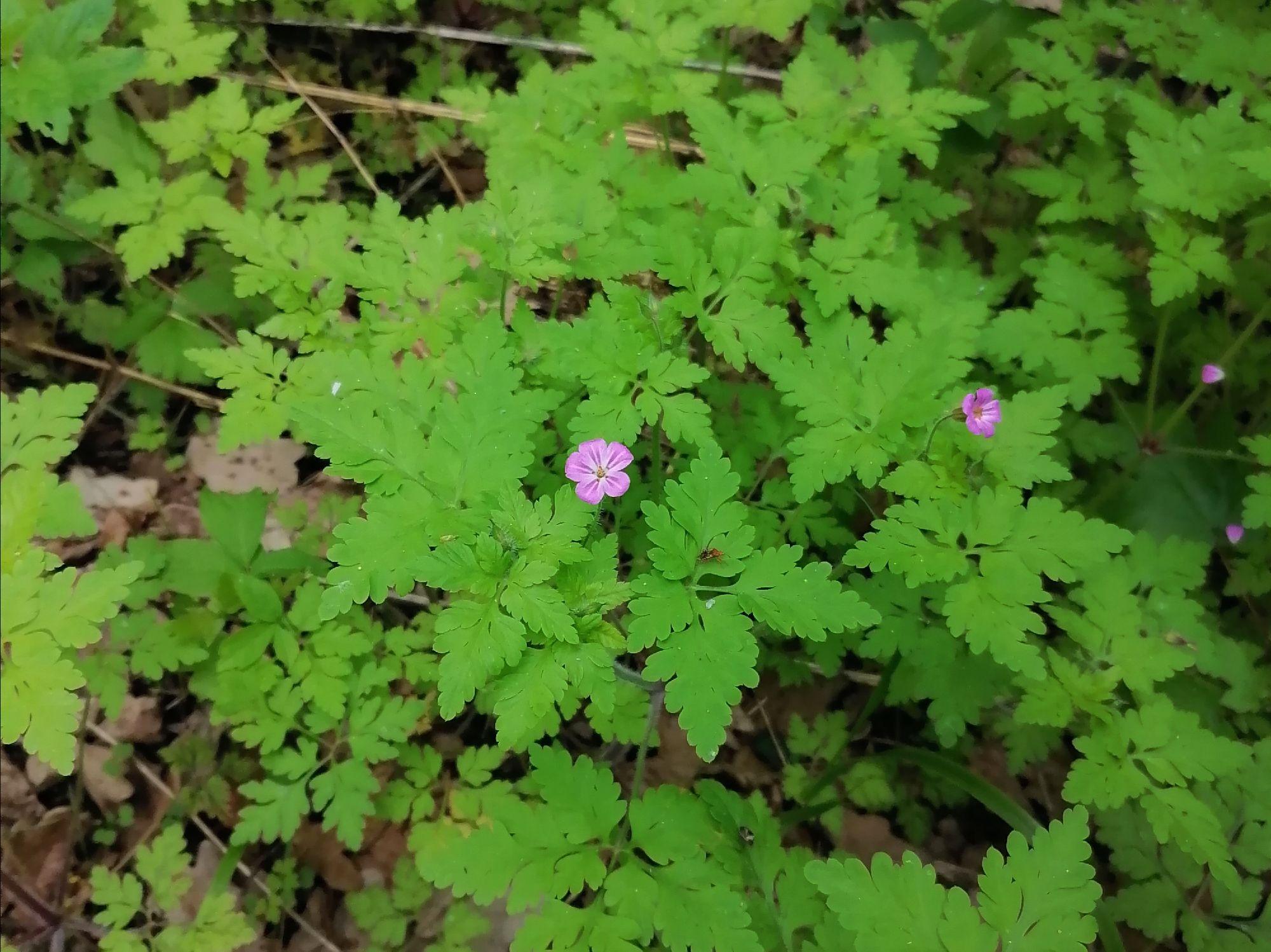Не знаю, как называется, но красивые цветочки