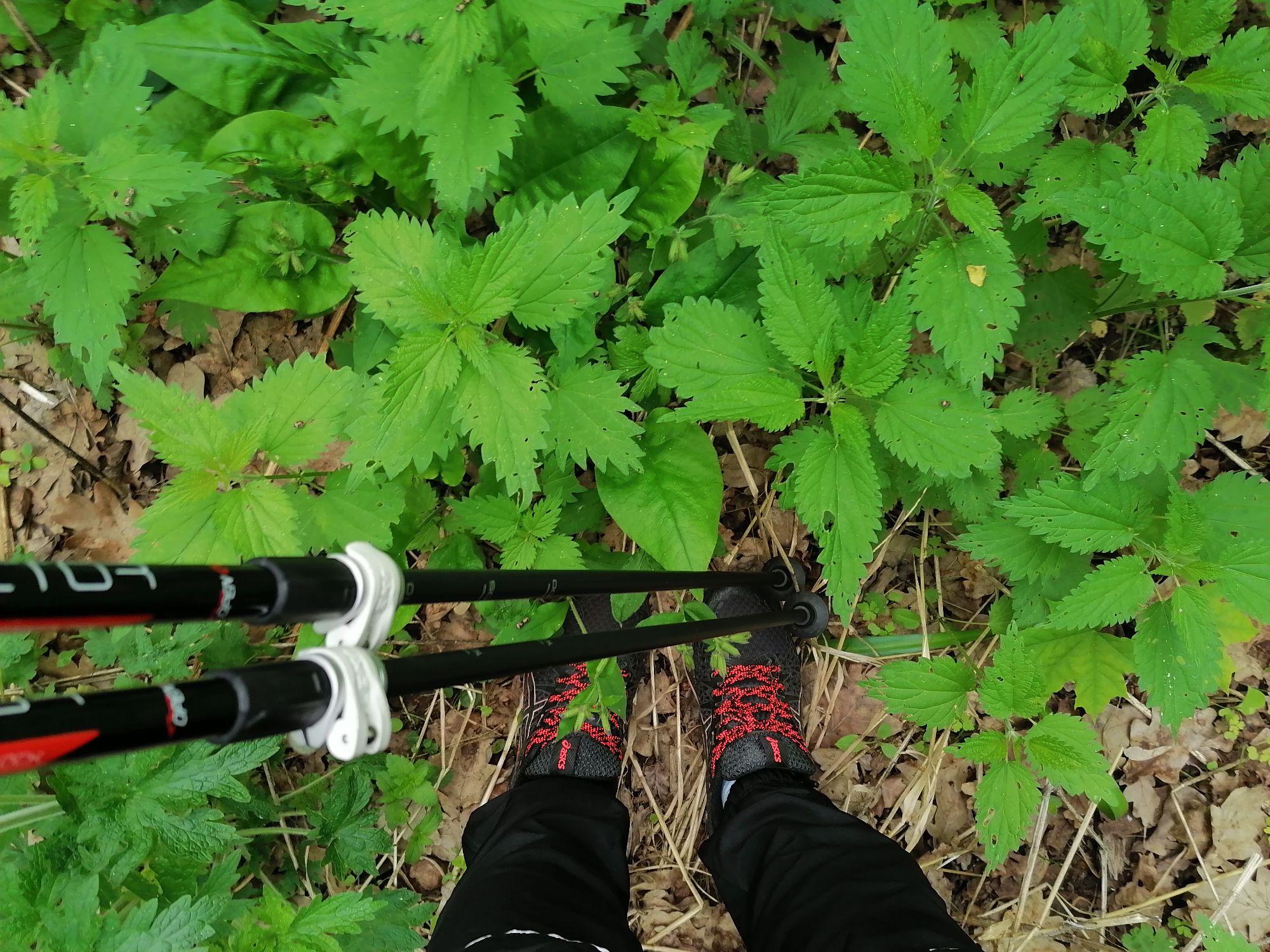 Ноги в траве. Ну и палки, конечно!