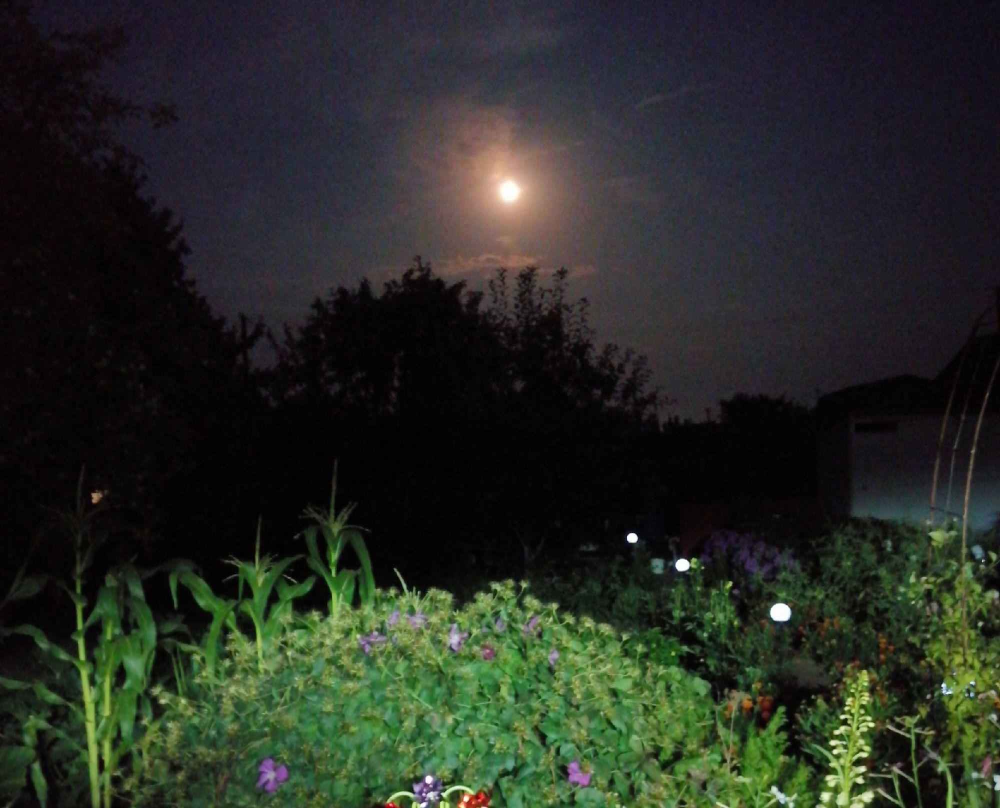 Луна взошла